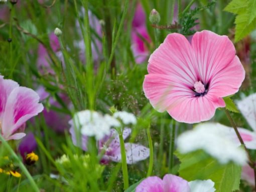 Creating your own mini meadow